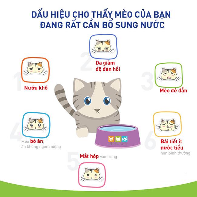 Dấu hiệu nhận biết em mèo đang cần bổ sung nước và những việc cần làm - phụ kiện thú cưng pet plaza
