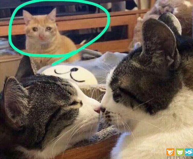 Dấu hiệu nhận biết em mèo đang cần bổ sung nước và những việc cần làm