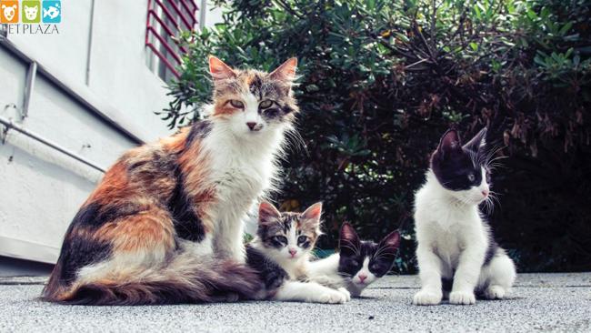 5 Cách bảo quản thức ăn cho Mèo - Phụ kiện thú cưng Pet Plaza