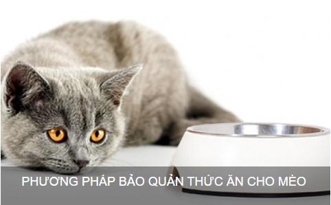 5 Cách bảo quản thức ăn cho Mèo
