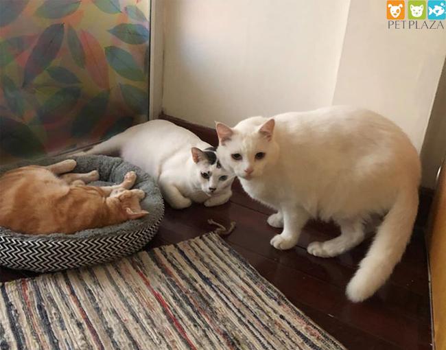 9 lưu ý phổ biến cần tránh khi cho mèo ăn - Phụ kiện thú cưng