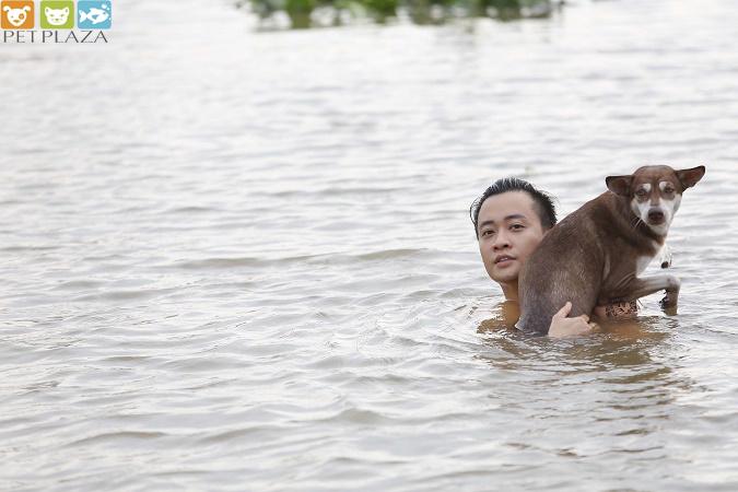 Linh rin yêu thú cưng lương mạnh hải yêu thú cưng - pet plaza