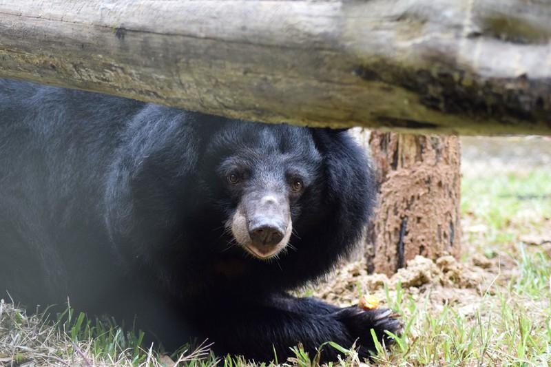 Phoenix – chú gấu vừa được Maggie Q đặt tên.