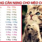 Bảng cân nặng cho mèo con - Pet plaza