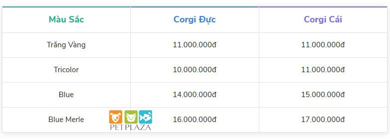 Bảng giá chó corgi - chó corgi giá bao nhiêu