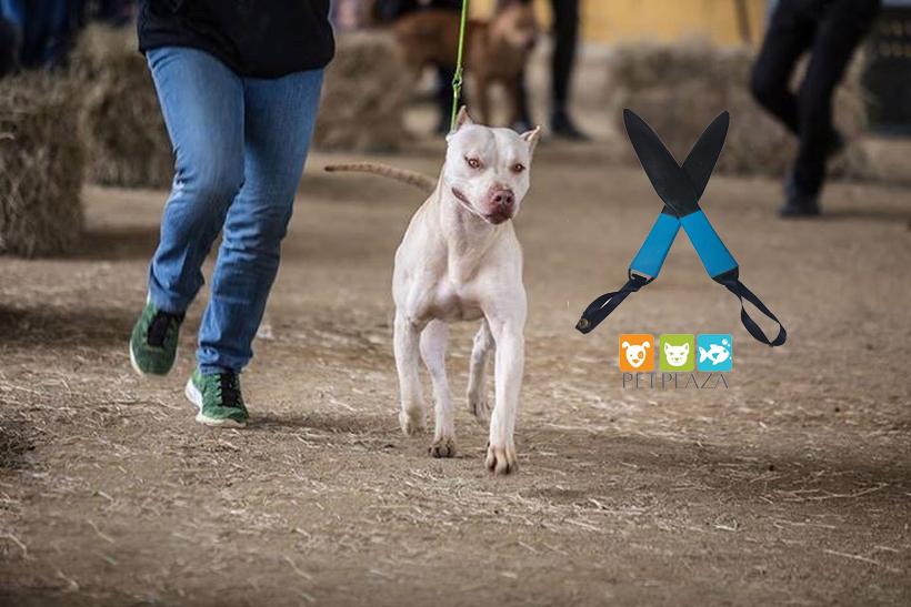 Bán bậy nanh cho chó khi cắn nhau petplaza