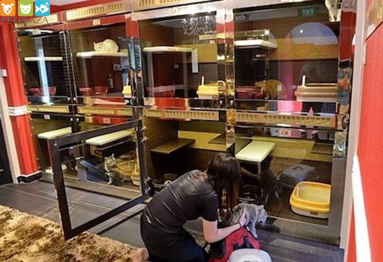 """Sướng như boss dịp Tết: Sen đưa đi làm đẹp xong gửi vào khách sạn chó mèo siêu """"sang chảnh"""" giá tiền triệu"""