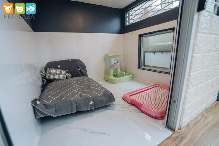 Các loại phòng khác nhau dành cho các bé đều đảm bảo có đệm, bình nước, bát ăn tự động và khay vệ sinh.