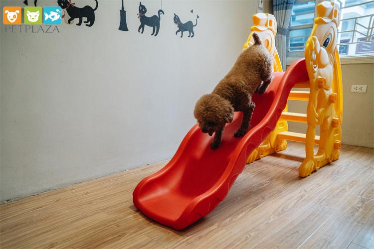Khách sạn cho chó dịp tết tại pet hotel - phụ kiện chó mèo pet plaza