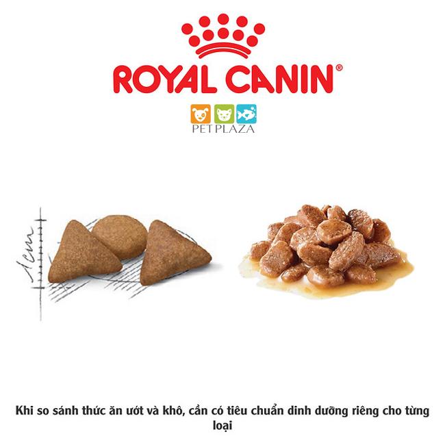 đọc thông tin về thức ăn hạt và thức ăn ướt cho mèo - phụ kiện thú cưng pet plaza