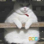 Cách đọc hiểu thông tin trên bao bì thức ăn cho chó mèo - petplaza