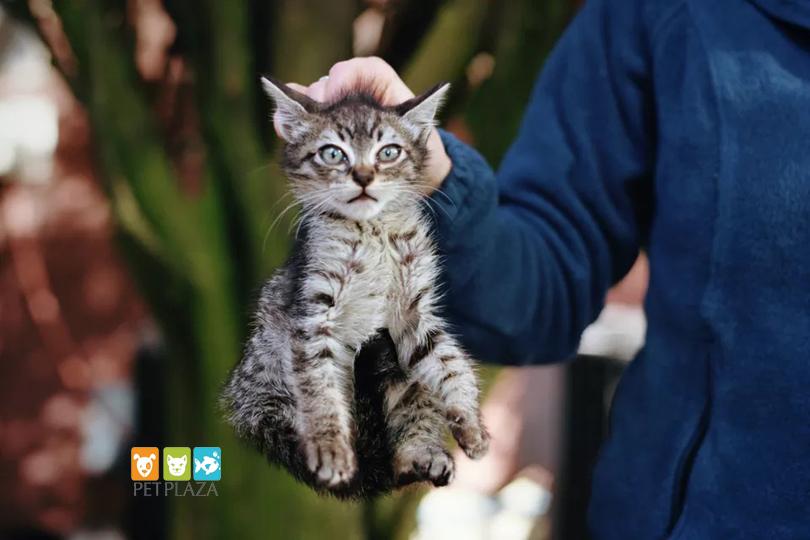 Cách ngăn mèo đánh nhau - phụ kiện chó mèo pet plaza