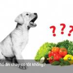 Cho chó ăn chay có tốt không petplaza