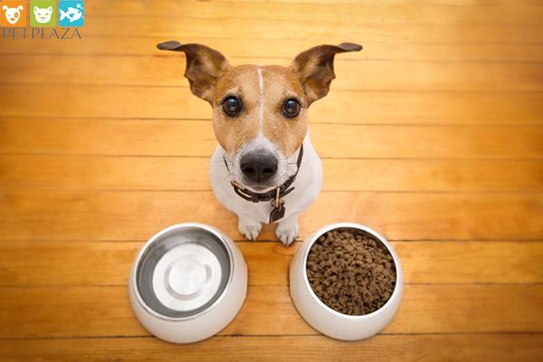 Cho chó ăn chay ? Phụ kiện thú cưng Pet Plaza