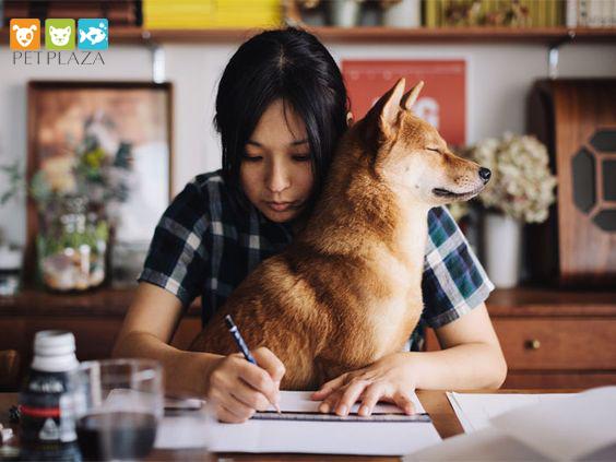 Có nên cho chó ăn nhiều mỡ - Phụ kiện thú cưng chó mèo Pet Plaza