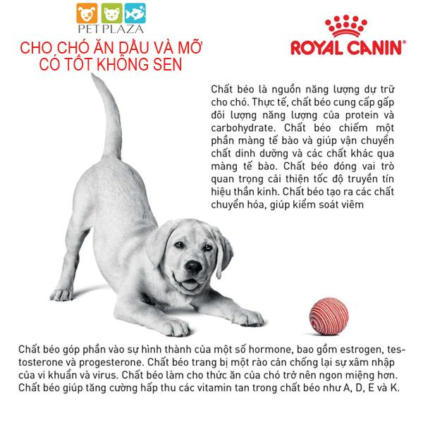 Cho chó ăn dầu và mỡ có TỐT không Sen?