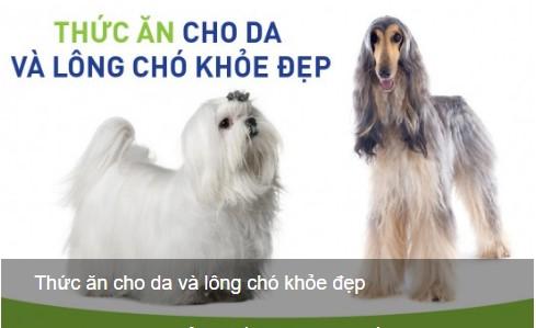 Cho chó ăn gì để lông dài và da khỏe mạnh -petplaza