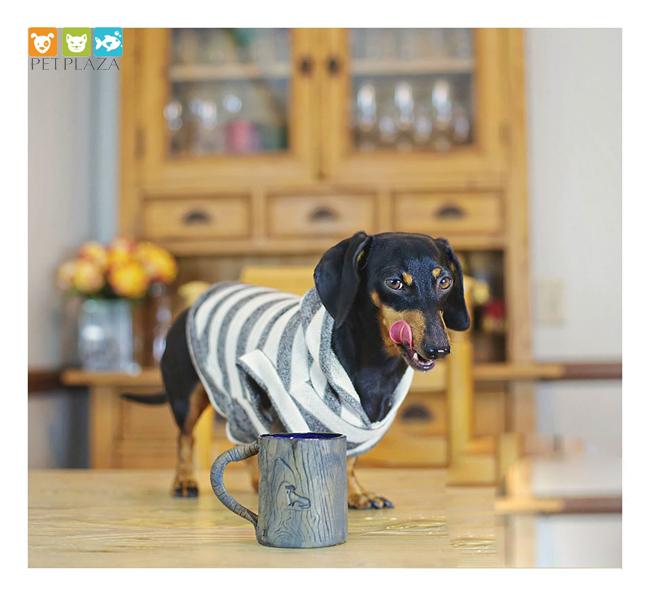 Cho chó ăn theo chế độ ăn kết hợp thức ăn khô và thức ăn ướt - đồ chơi cho chó tại phụ kiện chó mèo