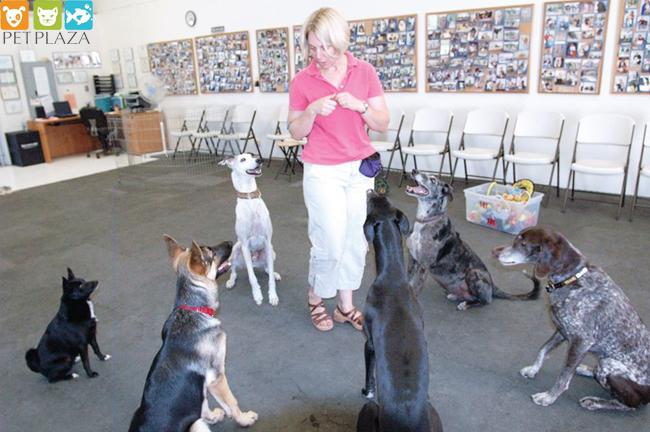 Cho chó ăn theo chế độ ăn kết hợp thức ăn khô và thức ăn ướt - phụ kiện chó mèo PetPlaza
