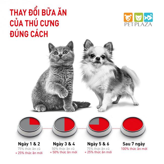 Cho chó ăn theo chế độ ăn kết hợp thức ăn khô và thức ăn ướt - phụ kiện chó mèo Pet Plaza