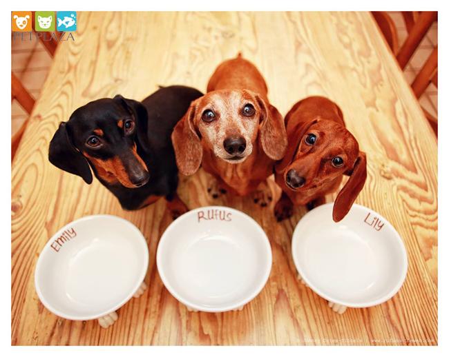 Cho chó ăn theo chế độ ăn kết hợp thức ăn khô và thức ăn ướt- phụ kiện thú cưng chó mèo Pet plaza