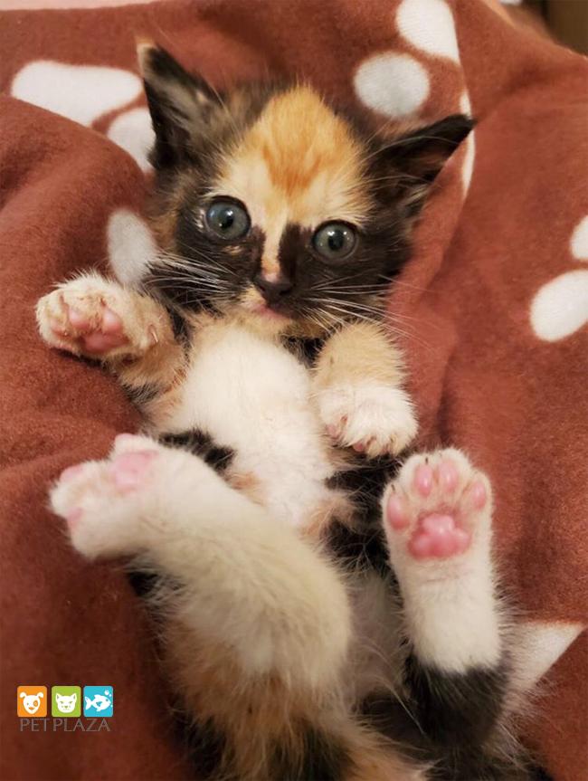 cho mèo con ăn gì - phụ kiện thú cưng Pet Plaza