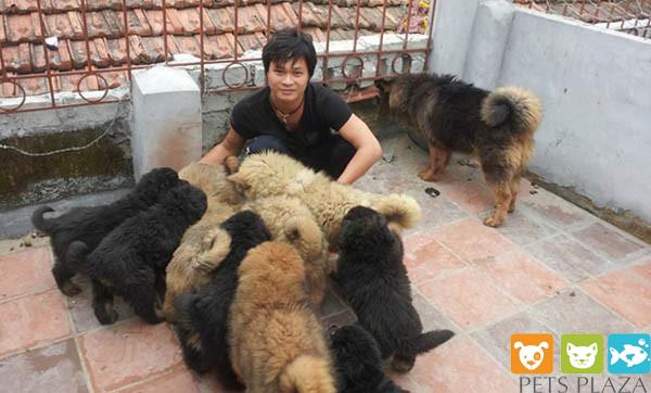 Kiều Văn Hoàng và Chó Ngao Tây Tạng tại Pet Plaza