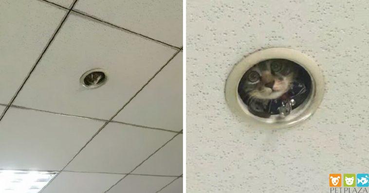"""Nhân viên văn phòng tìm hiểu một """" chú mèo giám sát """"đã lén lút theo dõi họ"""