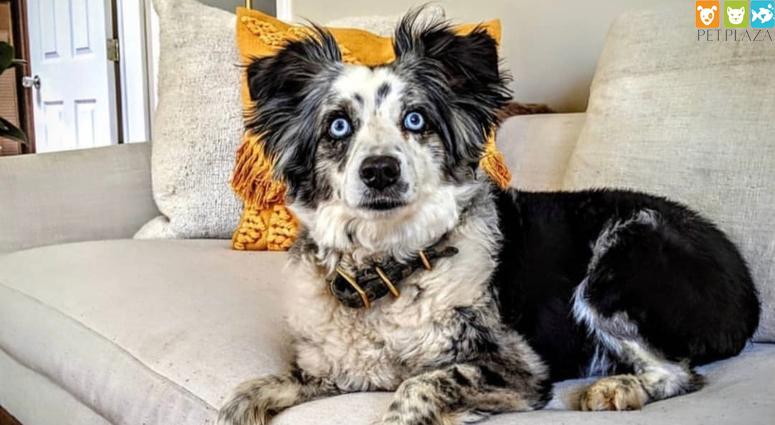 Tìm kiếm thú cưng bị thất lạc cô gái đã thuê máy bay riêng đi tìm - Phụ kiện thú cưng Pet Plaza