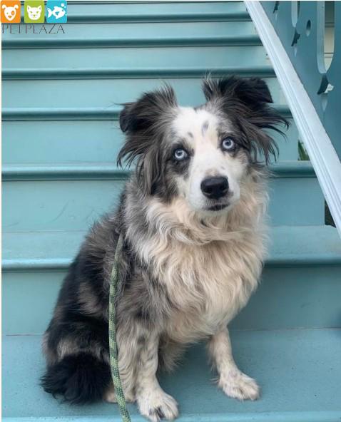 Tìm kiếm thú cưng bị thất lạc cô gái đã thuê máy bay riêng đi tìm - phụ kiện chó mèo Petplaza