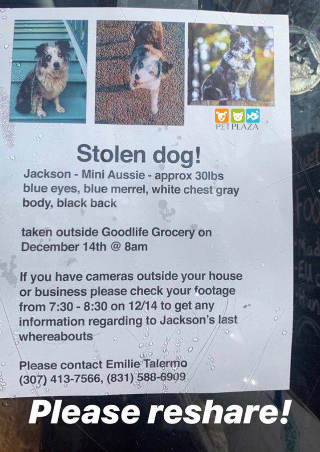 Tìm kiếm thú cưng bị thất lạc cô gái đã thuê máy bay riêng đi tìm - phụ kiện thú cưng Petplaza