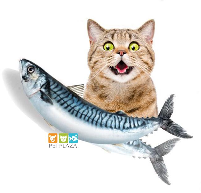Có nên cho chó mèo ăn thịt sống BARF những rủi ro - phụ kiện thú cưng