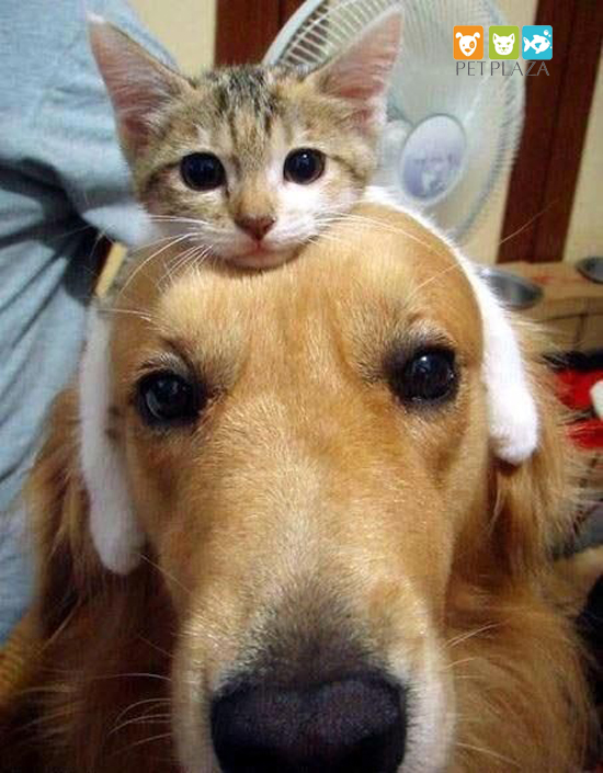 Thức ăn tươi sống cho chó mèo - phụ kiện thú cưng