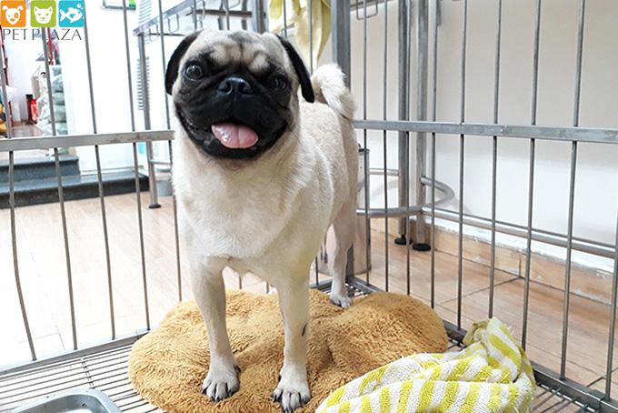 Dịch vụ chăm thú cưng kiếm tiền triệu dịp Tết - phụ kiện chó mèo