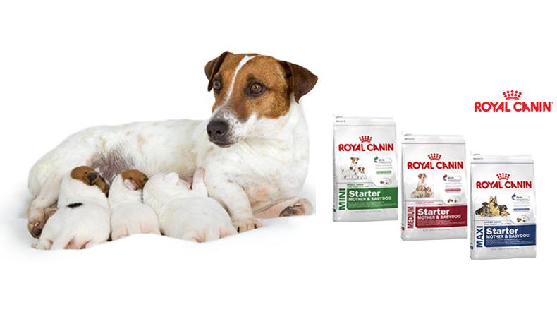dinh dưỡng cho chó qua các giai đoạn