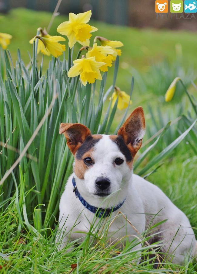 dinh dưỡng cho chó qua các giai đoạn - phụ kiện thú cưng Pet Plaza