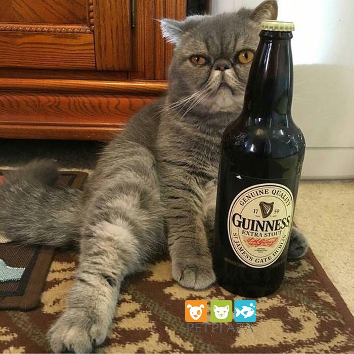 Em mèo tồi tệ đang uống bia - phụ kiện chó mèo pet plaza