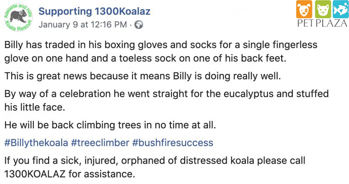 Gấu túi koala 1300koalaz - phụ kiện chó mèo pet plaza