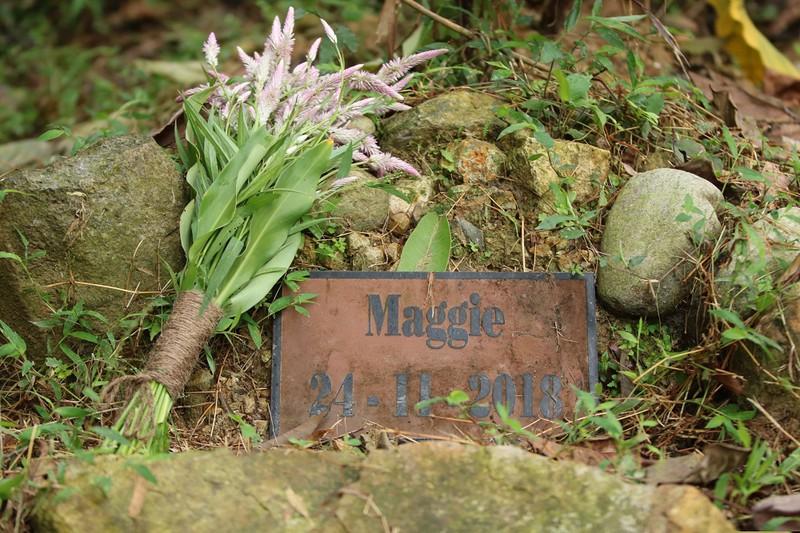 Mộ của gấu Maggie tại Trung tâm cứu hộ gấu Việt Nam.