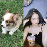 Hot girl Linh Ka muối mặt vì Mỡ em thú cưng nghịch ngợm