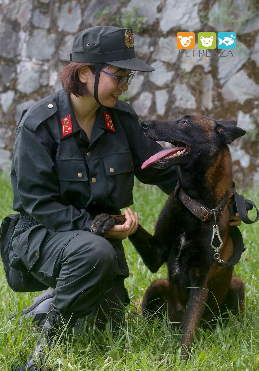 Huấn luyện chó béc bỉ - PetPlaza - phụ kiện chó mèo