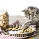 Khẩu phần ăn cho mèo 5 lưu ý chuẩn bị kế hoạch