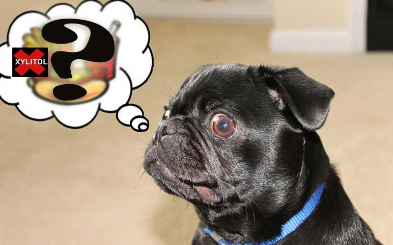 Không nên cho chó ăn Xylitol- phụ kiện chó mèo pet plaza
