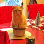 """Mèo ăn mặn là """"khóc"""" - Phụ kiện chó mèo Pet Plaza"""