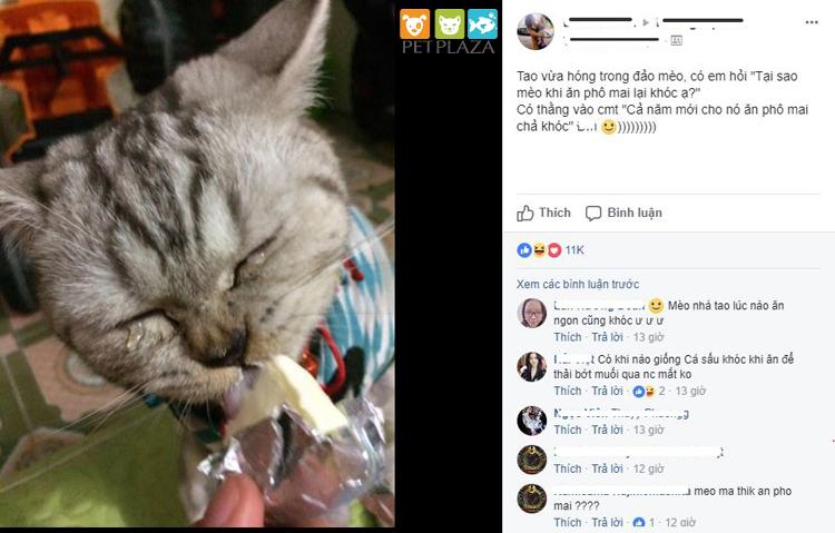 """Mèo ăn mặn là """"khóc"""" thú cưng thú cưng phụ kiện chó mèo Pet Plaza"""