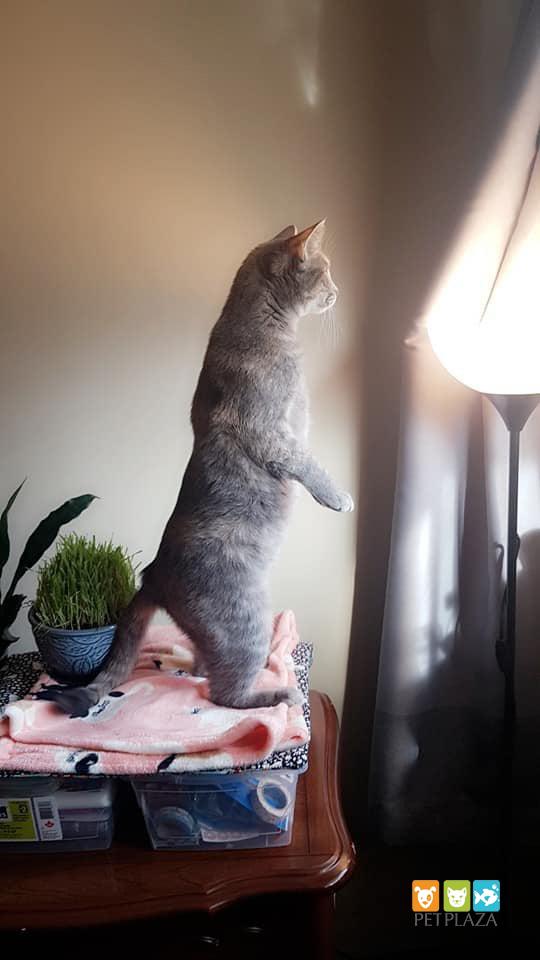 Mèo đánh nhau và cách giữ hòa bình giữa những hoàng thượng - phụ kiện thú cưng pet plaza