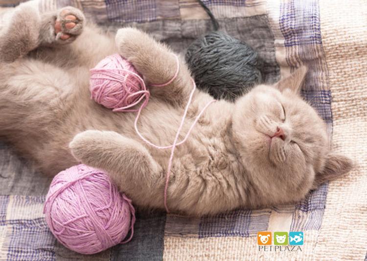 Mèo nuốt phải sợi dây hay sợi chỉ, Sen cần phải làm gì? - phụ kiện thú cưng