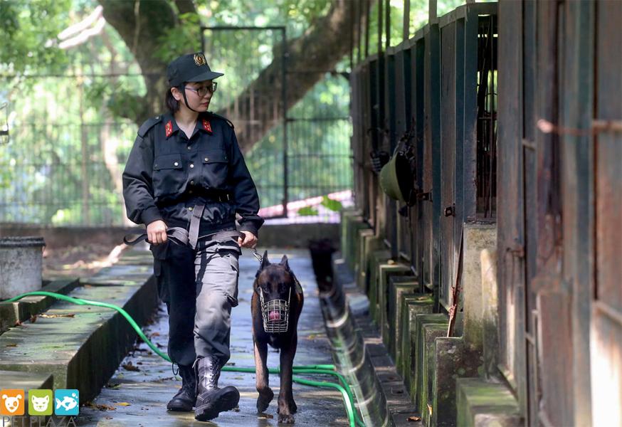 Nữ cảnh sát cở động huấn luyện chó Béc Bỉ tên Ky - Phụ kiện thú cưng chó mèo Pet Plaza