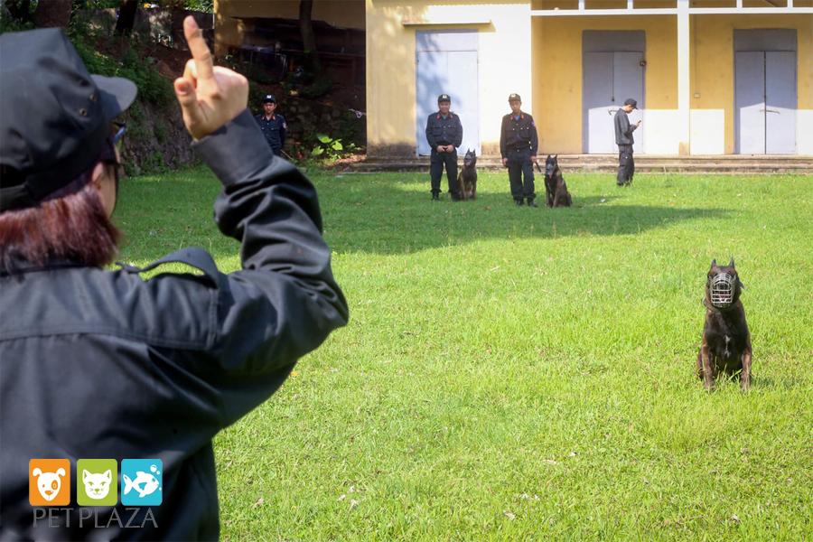 Nữ cảnh sát huấn luyện chó nghiệp vụ béc bỉ - phụ kiện thú cưng chó mèo Pet Plaza