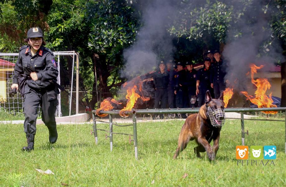 Nữ cảnh sát huấn luyện chó nghiệp vụ béc bỉ - phụ kiện thú cưng